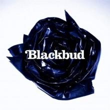 Blackbud – Blackbud